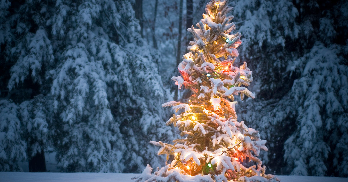December: a month of Celebrations